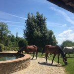 Horses grazing next to the courtyard area on Villa grounds.