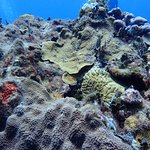 Pretty reef shot.