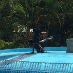 Sea Lion show at Manati Park