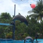 Dolphins at Manati Park