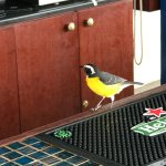 Visitor at the bar (Chibi bird - which the bar (Chibi-Chibi) is named after