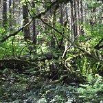 Hicks Lake Trail