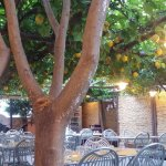 The lovely lemon garden