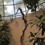 Photo de Reptile Gardens