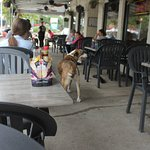 Patio dogs were all well behaved, just like their owners.