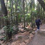 Scenic bush walks