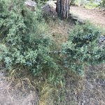 Juniper berries next to the picnic table