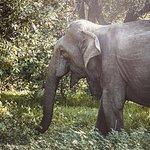 We saw a few Sri Lankan Elephants