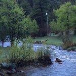 View of crossing elk.