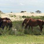 Foto di Wild Horse Adventure Tours