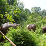 Elephants wandering off in the jungle at EVP.