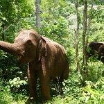 Elephants eating at EVP.