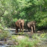 Elephants crossing the river at EVP.