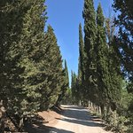 Photo de Agriturismo Sant'Anna in Camprena
