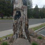 Foto de Comfort Inn Mount Shasta Area