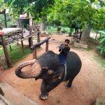 Elephant Riding & Bathing