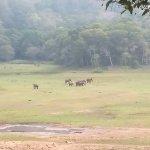 Periyar Tiger Reserve Foto