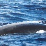 Minke whale seen on trip