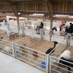 Fishers Adventure Farm Park - Animal Encounters Barn