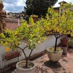 The lemon-tree-lined terrace