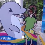 Photo of Dolphin Discovery Cozumel