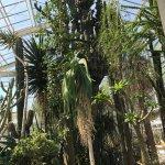Photo of Zurich Succulent Plant Collection