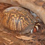 Snake taking refuge in a turtle shell