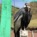 Photo de Santuario Animal de Cochahuasi