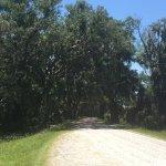 Treess with Spanish Moss