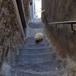 steep steps on short cut, take longer way, better