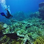 Diving the HMS Proselyte shipwreck