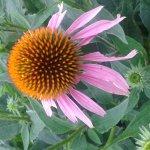 Photo de Lady Bird Johnson Wildflower Center