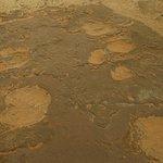 Petrified elephant and rhino tracks