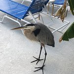 Great Heron Inn Photo