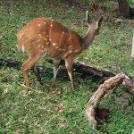 Foto de Victoria Falls Safari Club