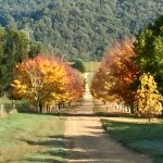 Autumn toning as you enter the drive
