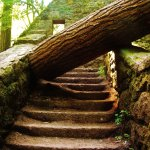 huge fallen tree trunc over stairway at the Witches House