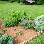 Typical Subsistence Garden