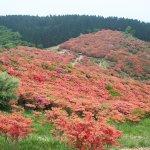 Photo of Katsuragi Highlands