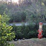 Billede af Canyon Creek Lodge