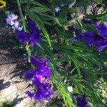 Photo de Schreiner's Iris Gardens