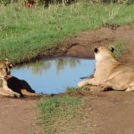 Kenya Short Safaris, Kenya Tour holidays, Kenya Wildlife Safaris , Safaris Kenya, Kenya Safari T