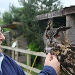 Beautiful Dennis, the European Eagle Owl