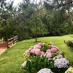 Photo de Hotel Bosque Escondido