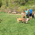 Foto de West Vail Dog Park