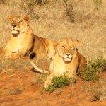 tsavo national park east kenya