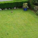 Room 2 - hares in front garden