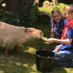 Largest Rodent on the Planet!
