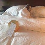 Sheraton Dallas Hotel Picture