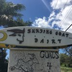 Foto di Surfing Goat Dairy